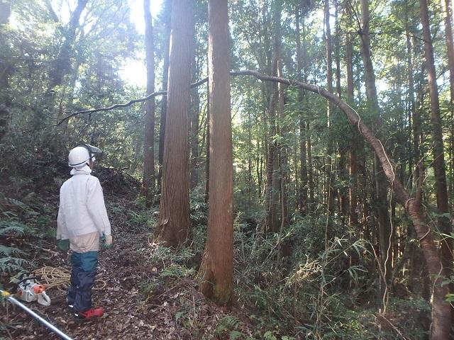 f:id:nekoyanookami:20201108173345j:plain