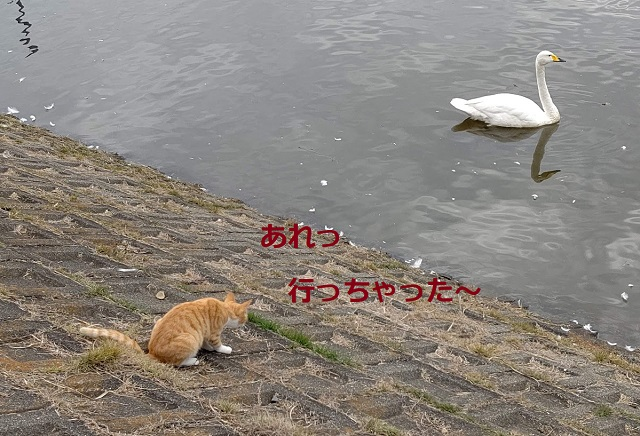 f:id:nekoyanookami:20201108180821j:plain