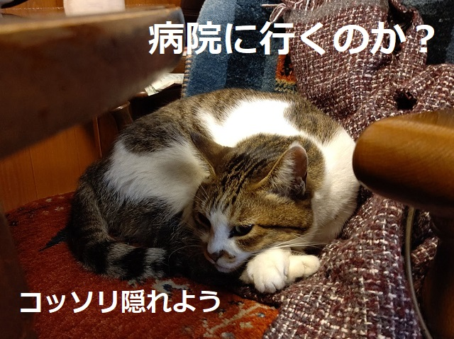 f:id:nekoyanookami:20201125143654j:plain
