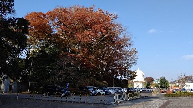 f:id:nekoyanookami:20201125153650j:plain