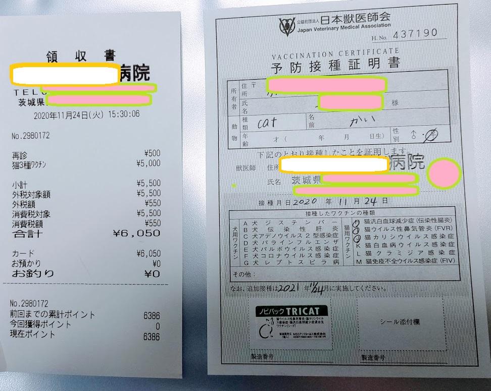 f:id:nekoyanookami:20201125160546j:plain