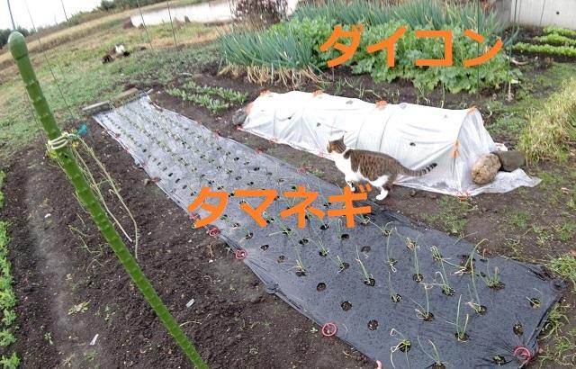f:id:nekoyanookami:20201206170750j:plain