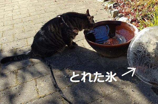 f:id:nekoyanookami:20201217170702j:plain
