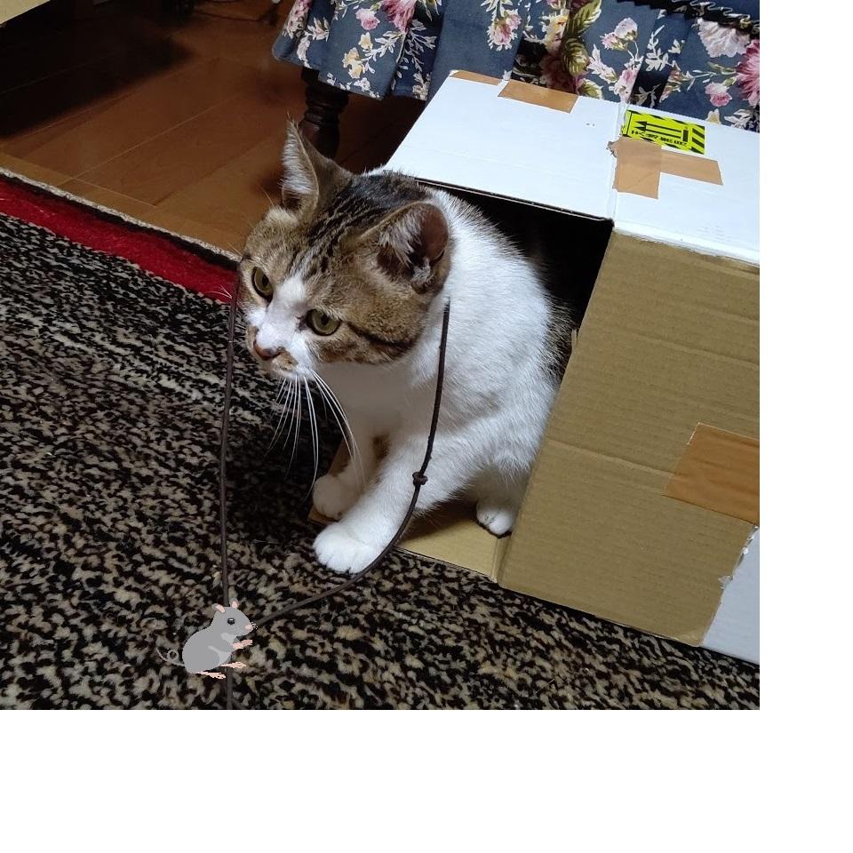 f:id:nekoyanookami:20201223145901j:plain