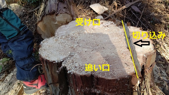 f:id:nekoyanookami:20210221152429j:plain
