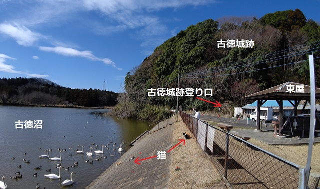 f:id:nekoyanookami:20210316155230j:plain