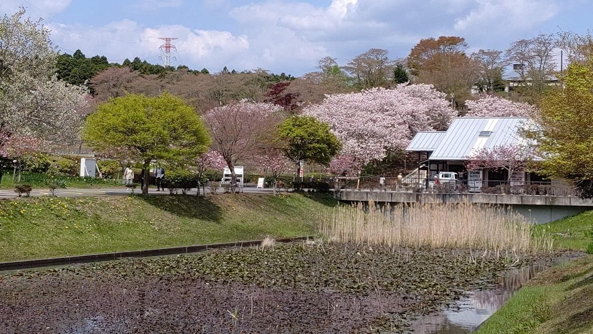 f:id:nekoyanookami:20210412231835j:plain