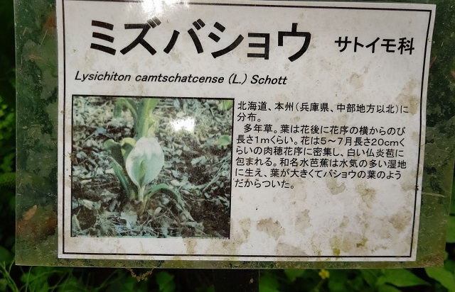 f:id:nekoyanookami:20210509162118j:plain