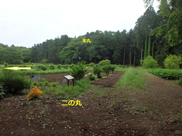 f:id:nekoyanookami:20210515190755j:plain