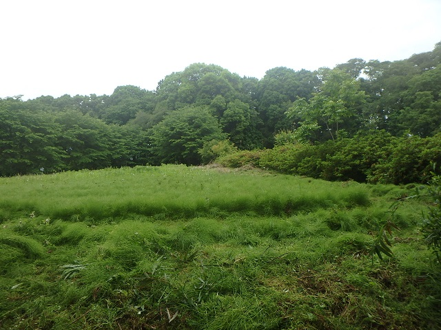 f:id:nekoyanookami:20210515191101j:plain