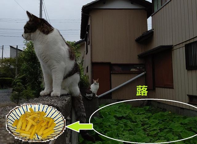f:id:nekoyanookami:20210517225006j:plain