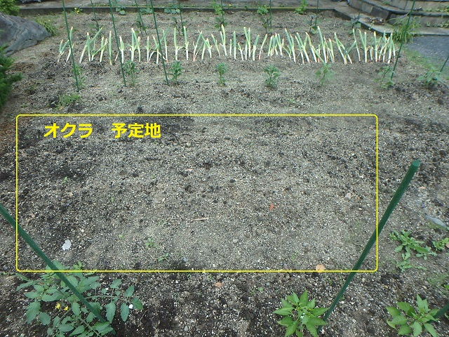 f:id:nekoyanookami:20210517225556j:plain