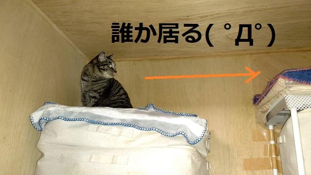 f:id:nekoyanookami:20210519170206j:plain