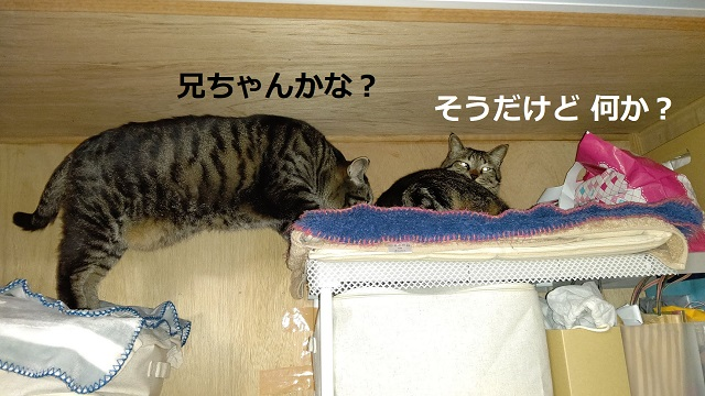f:id:nekoyanookami:20210519170432j:plain