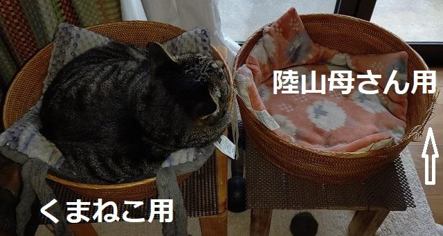 f:id:nekoyanookami:20210522150828j:plain