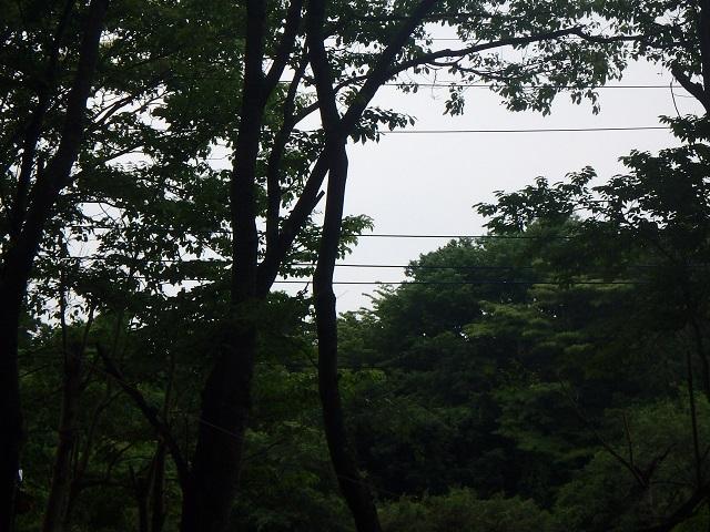 f:id:nekoyanookami:20210530193958j:plain