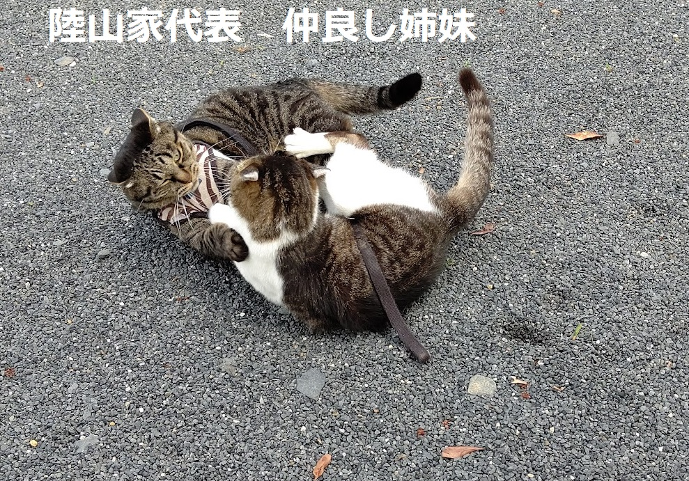 f:id:nekoyanookami:20210801155458j:plain