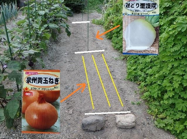f:id:nekoyanookami:20210831163649j:plain