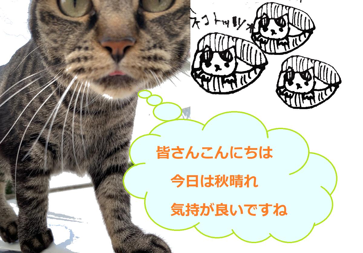 f:id:nekoyanookami:20210911152223p:plain