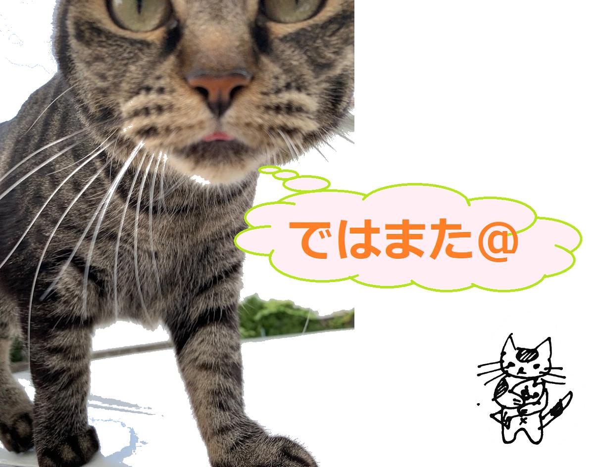 f:id:nekoyanookami:20210911155338p:plain