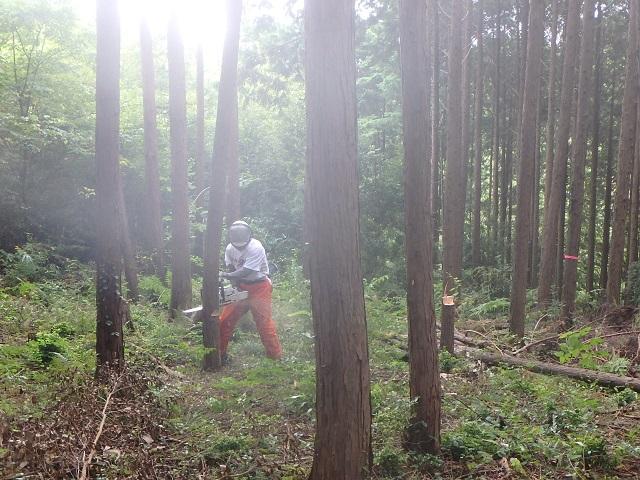 f:id:nekoyanookami:20210912162543j:plain