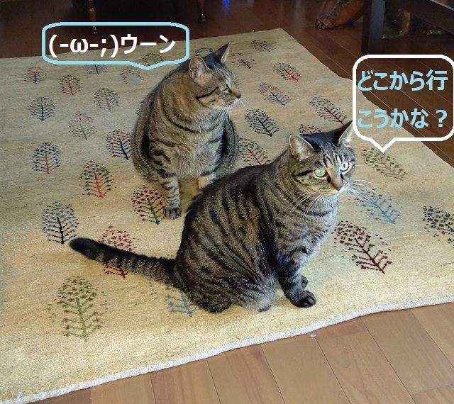 f:id:nekoyanookami:20210921230432j:plain