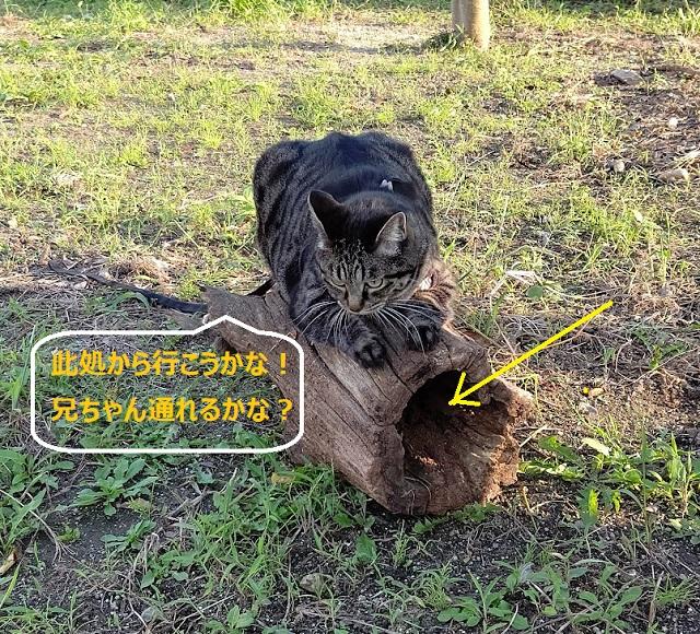 f:id:nekoyanookami:20210921230605j:plain