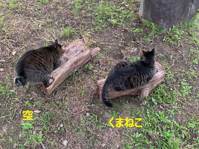f:id:nekoyanookami:20210921230636j:plain