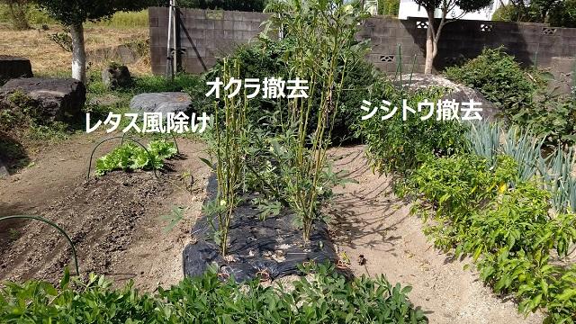 f:id:nekoyanookami:20210930213827j:plain