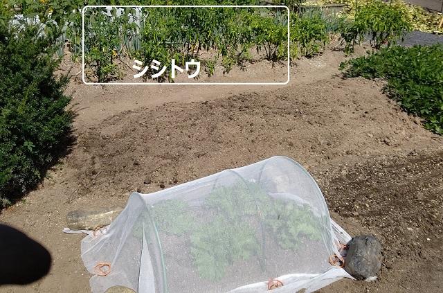 f:id:nekoyanookami:20210930220305j:plain