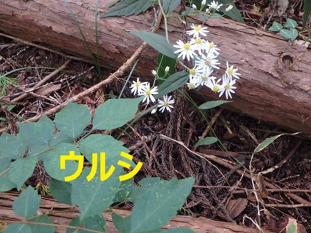 f:id:nekoyanookami:20211010145528j:plain