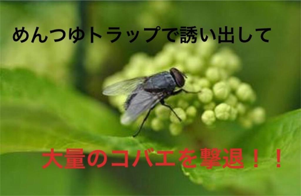 f:id:nemikky:20190817143816j:image