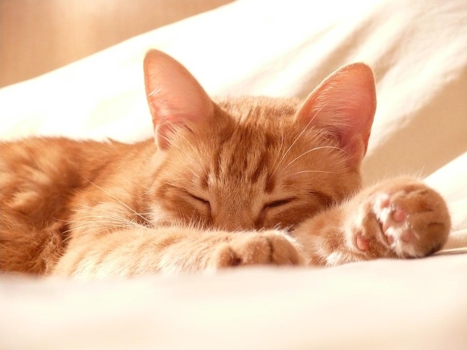 Free cat pictures fidnemucoro20170209085612jplain voltagebd Images
