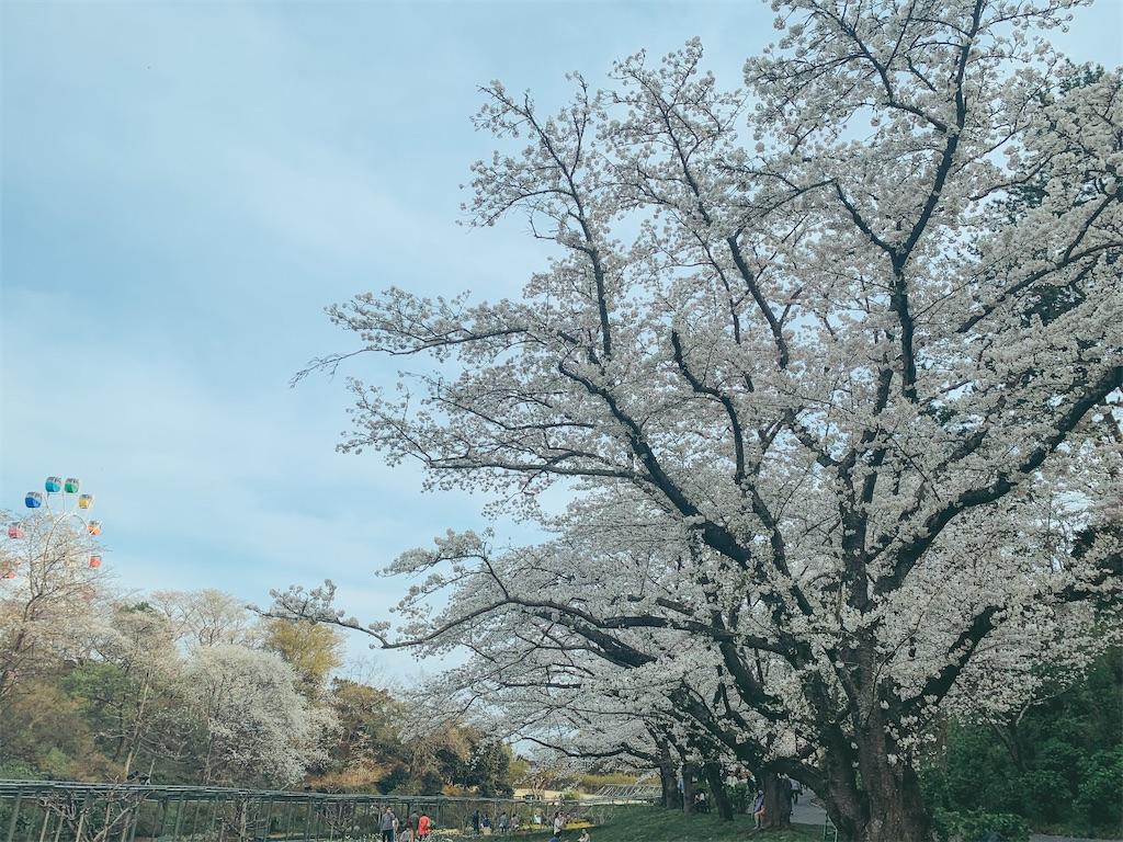 f:id:nemui-chan:20210404193018j:image