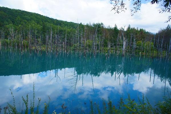 夏の北海道旅行「美瑛」