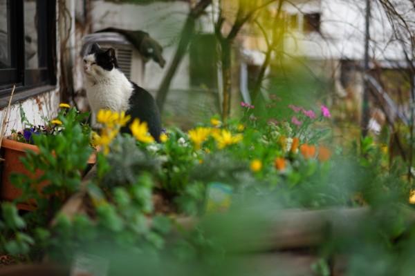 黒川温泉|猫