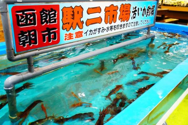 函館|函館朝市「活いか釣り堀」