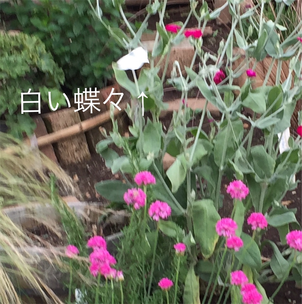 f:id:nemutan08:20170614164936j:image