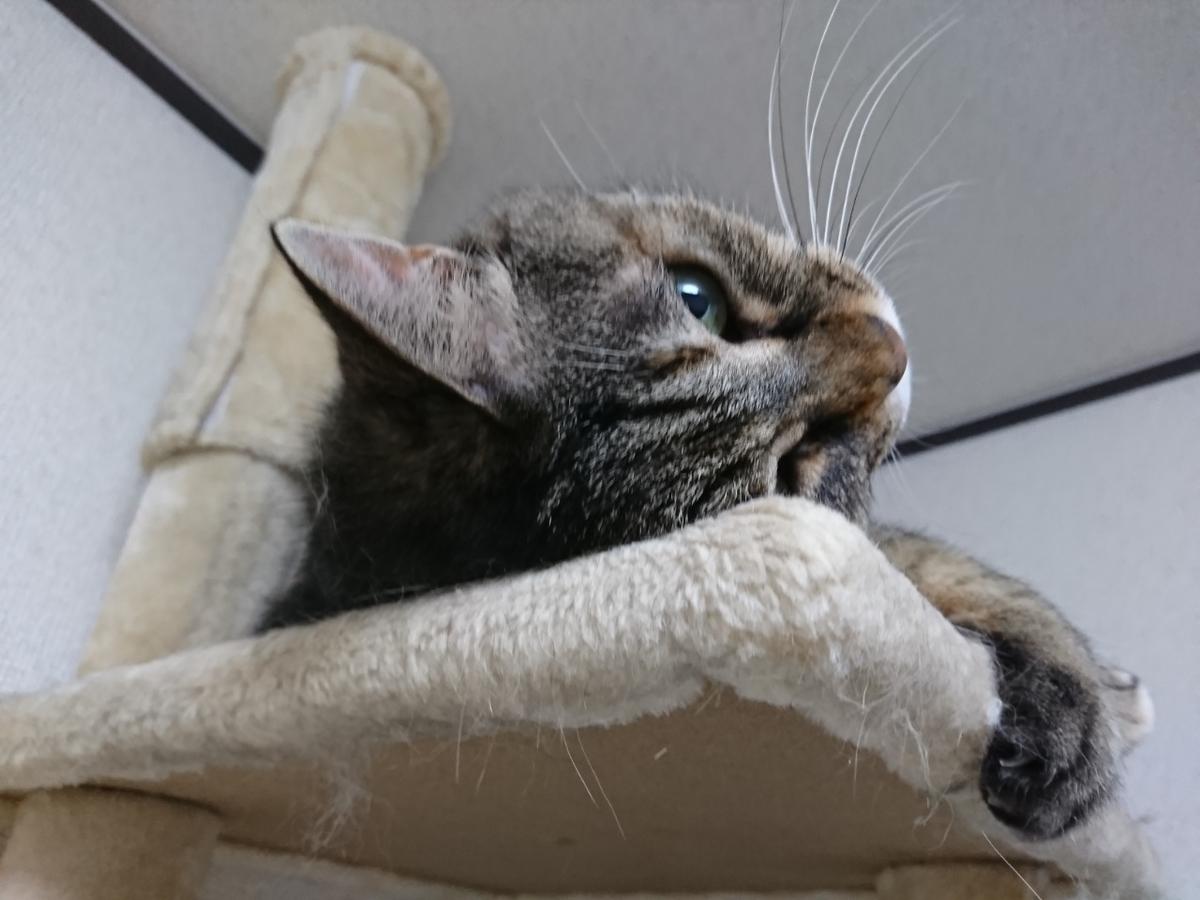kijitora–cat
