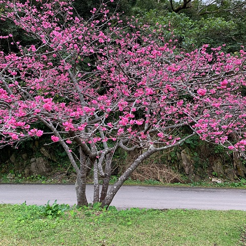 f:id:nenez-okinawa:20210212140424j:plain
