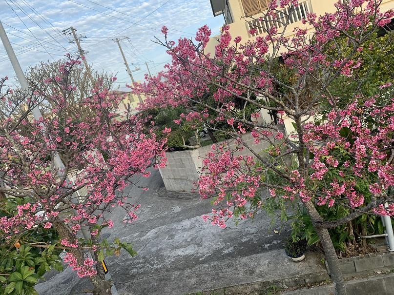 f:id:nenez-okinawa:20210212140503j:plain