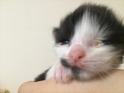 目ヤニで目が塞がった子猫