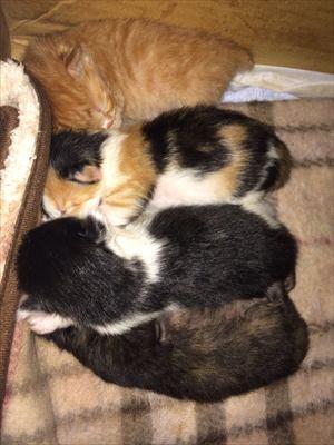 体温を調節する子猫