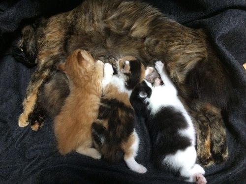 授乳する親猫
