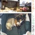 [オカン][ミィ]カーテン&首輪ない 13-03-15