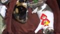 [キィ][ミィ]キィちゃんに、オオカミと赤ずきん 13-03-23