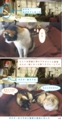 [ミィ][オカン][キジくん][ポスター]ミィちゃんポスターを心配 13-04-08