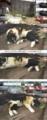 [ミィ][オカン]ミィちゃんがねらい撃ち(オカントンネル) 13-05-10
