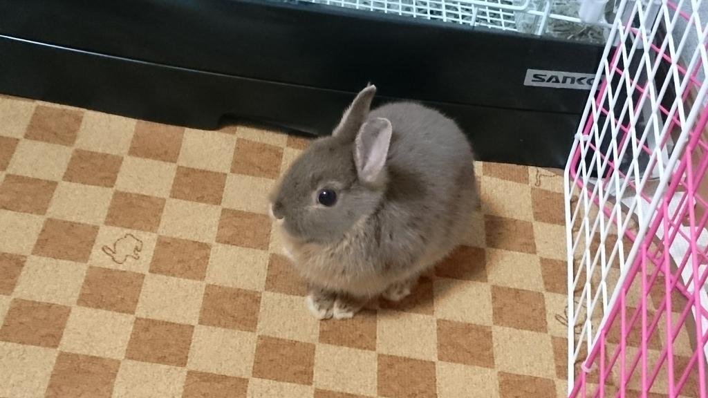 f:id:nether-rabbit-chiroru:20181106181805j:plain