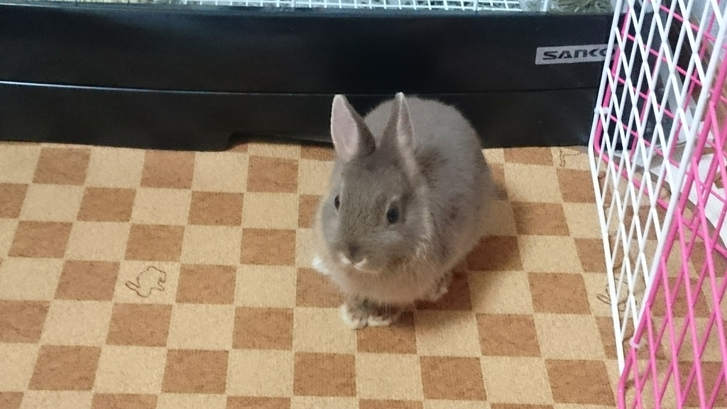 f:id:nether-rabbit-chiroru:20181106181959j:plain